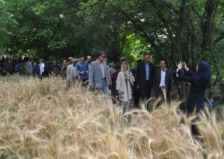 گزارش تصویری بازدید دکتر عزیزی و قائم مقام برنامه عمران سازمان ملل متحد در ایران از منطقه قوشخانه شیروان برای اجرای پروژه منارید